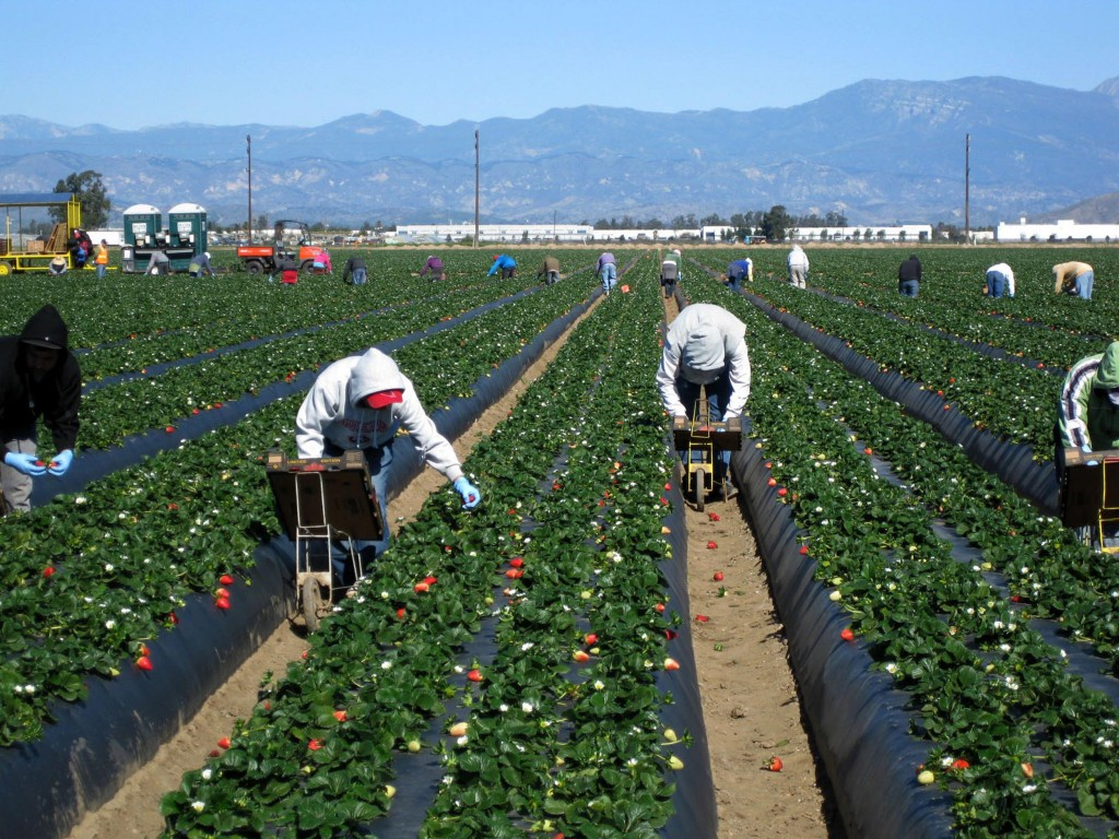 farmworkers_0923_web