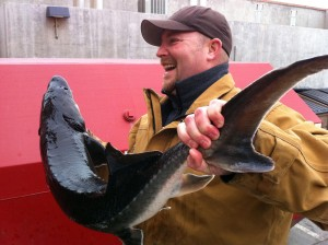 A sustainably farmed white sturgeon from one of our Fish to Fork partners
