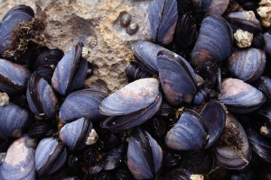 seafood_mussels-is1706740web