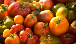 tomatoes-is04039917_web