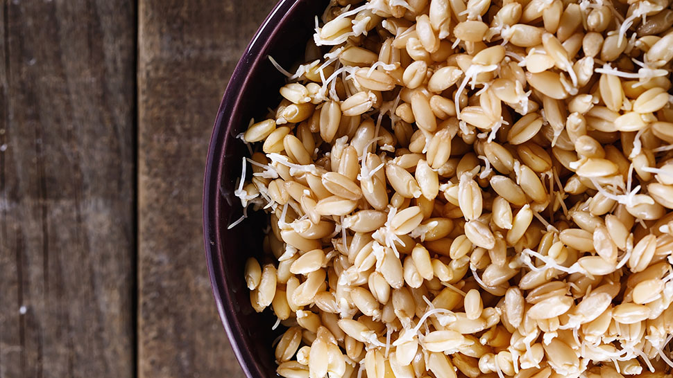shutterstock_319482653_sprouted grains_970x546