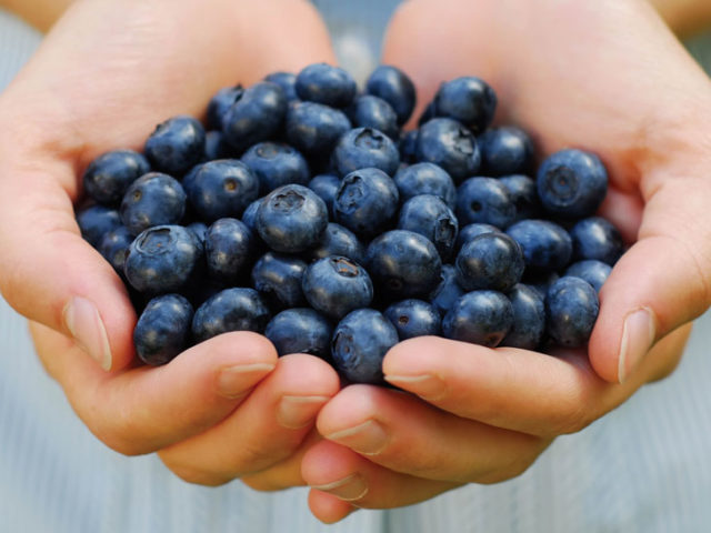blueberries-dt5851822_970y546