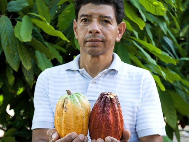 Man holding cocoa pods